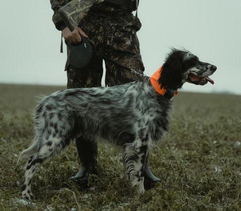 En jakthund och jägare